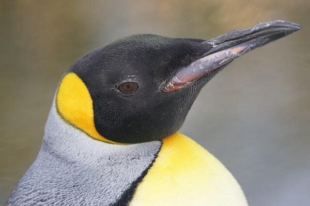 Penguin 860243 640